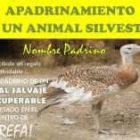 Tarjeta Regalo ANIMALES IRRECUPERABLES Reverso