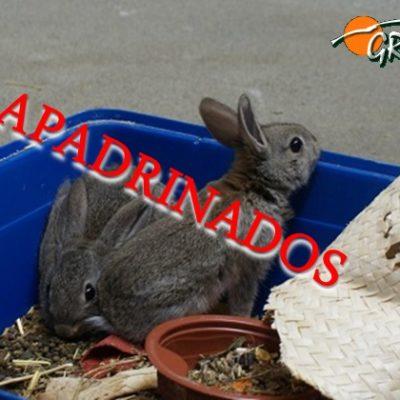 gazapos_apadrinados