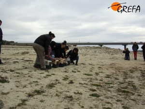iberación de cinco gaviotas sombíias