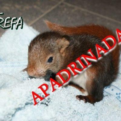 Ardilla1_apadrinadas