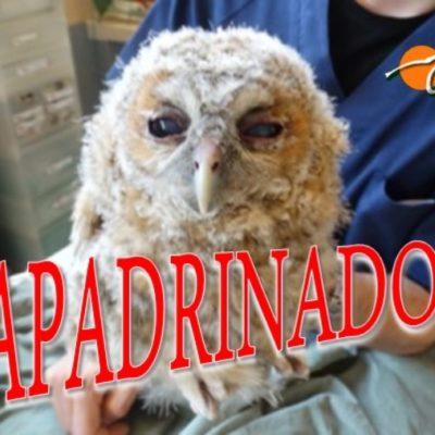 Cárabos_apadrinados