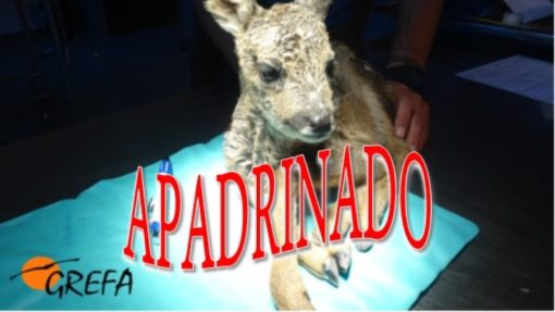 Corcino_000_apadrinado