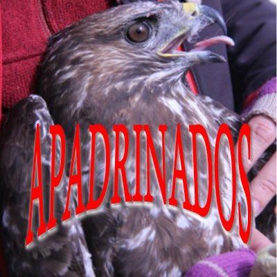 Ratonero_001_apadrinado