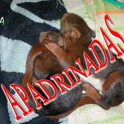 Ardillas_001_apadrinada