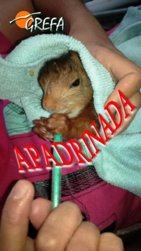 ardilla_001_apadrinada