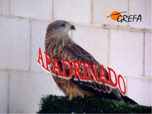 milano-real_16-3433_002_apadrinado