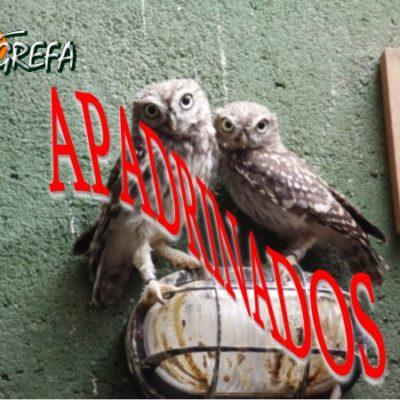 mochuelos_003_apadrinados