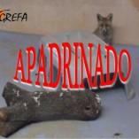 Zorro 16-4196_apadrinado