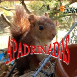 ardillas_003_apadrinadas