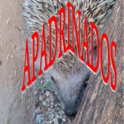 erizos-001_apadrinados